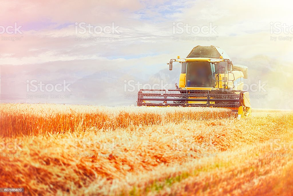 Combine Harvester in Barley Field during Harvest stock photo