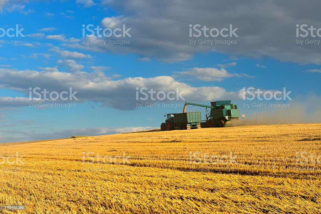 Combine Harvester in Barley Field Loading Grain into Tractor Trailer royalty-free stock photo