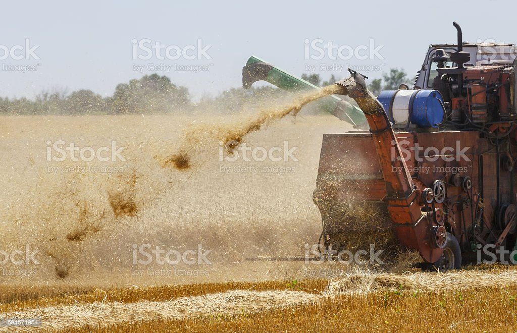 Combine harvester is working in the field, gathering the wheat stock photo