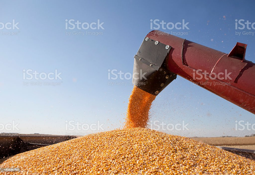 Combine Harvester Transferring Corn to Grain Trailer. royalty-free stock photo
