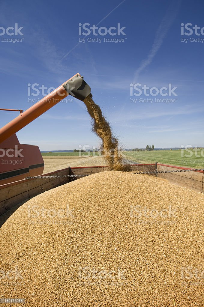 Combine Harvester Working in The Field royalty-free stock photo