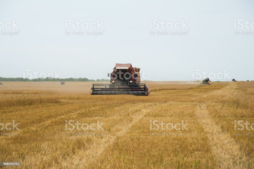 Combine harvesters in a field of wheat stock photo
