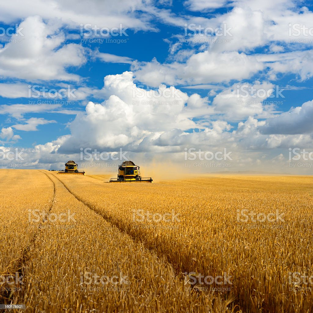 Combine Harvesters stock photo