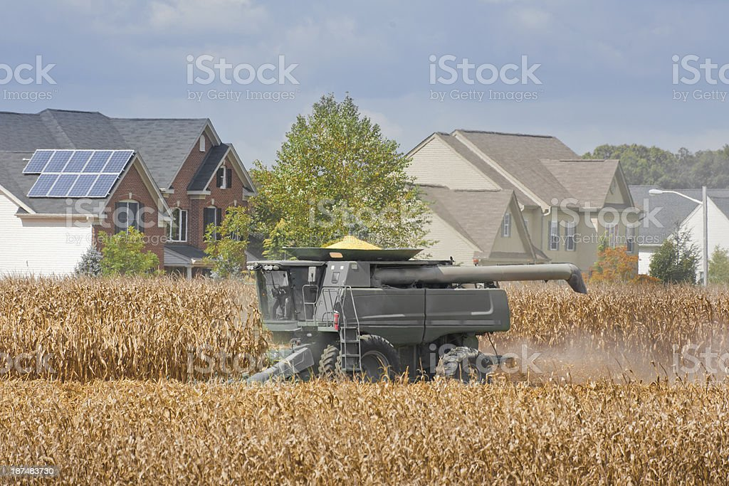 Combine Harvesting a Corn Field next to an Suburban Neighborhood royalty-free stock photo