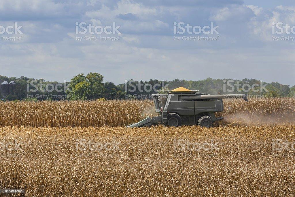 Combine Harvesting a Corn Field royalty-free stock photo