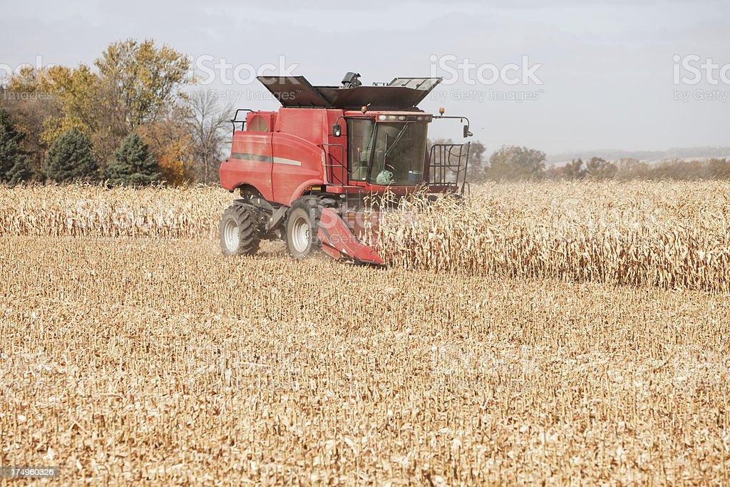 Combine Harvesting a Fall Corn Field stock photo