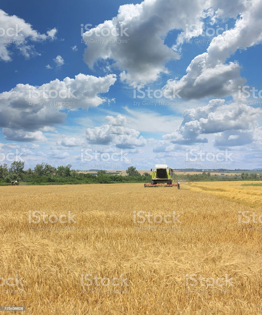 Combine harvesting a field of wheat royalty-free stock photo