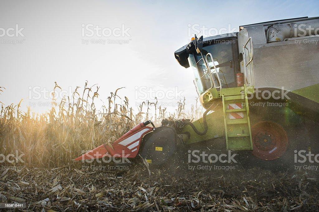 Combine harvesting crop corn royalty-free stock photo