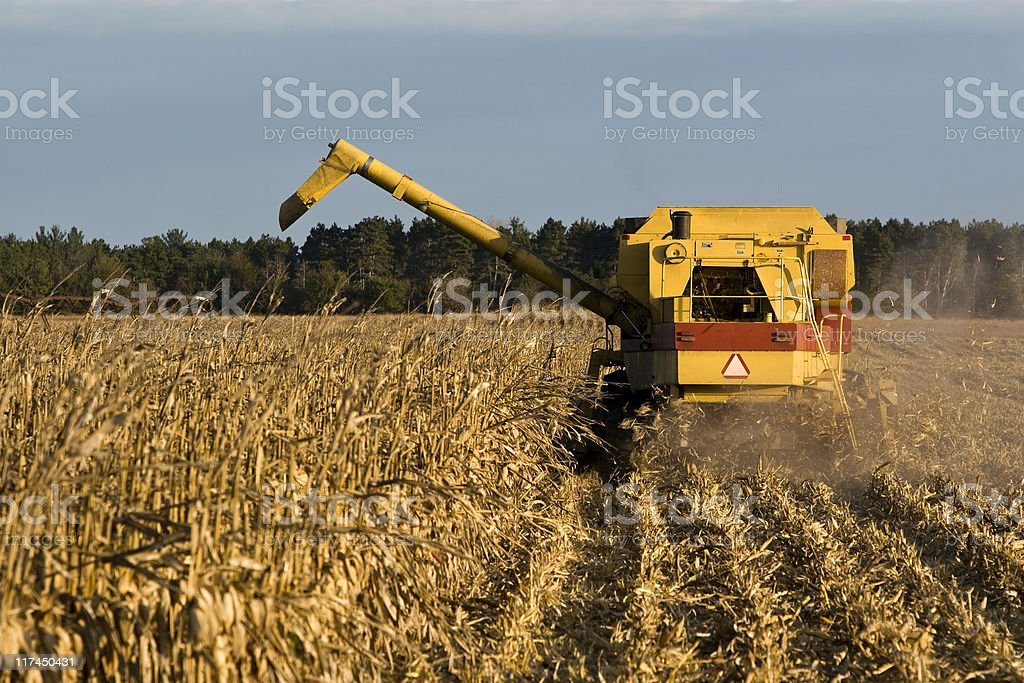 combine harvesting field corn royalty-free stock photo