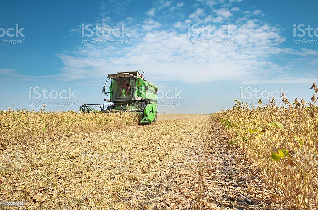 Combine harvesting soybeans stock photo