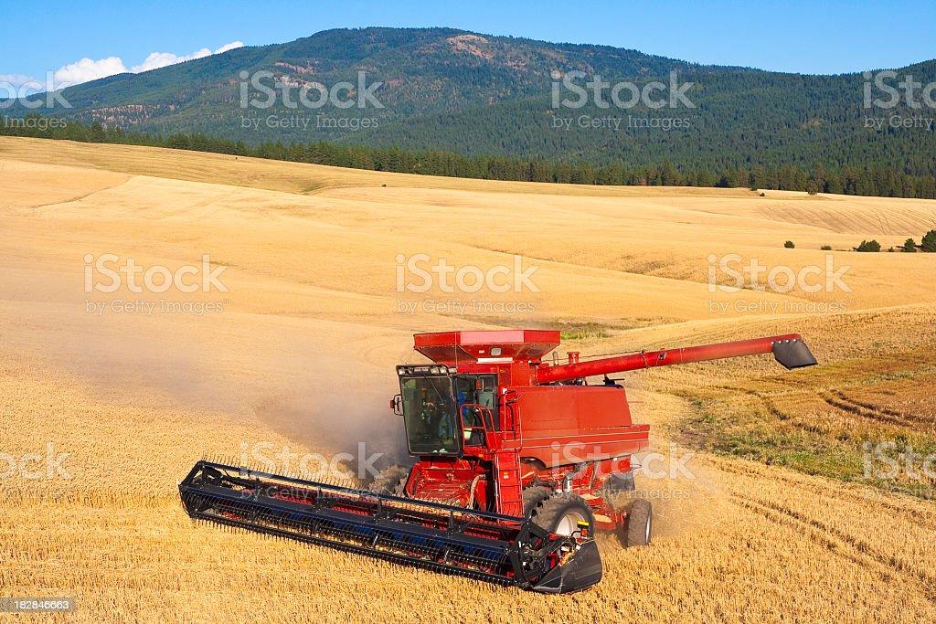 Combine Harvesting Wheat Crop stock photo
