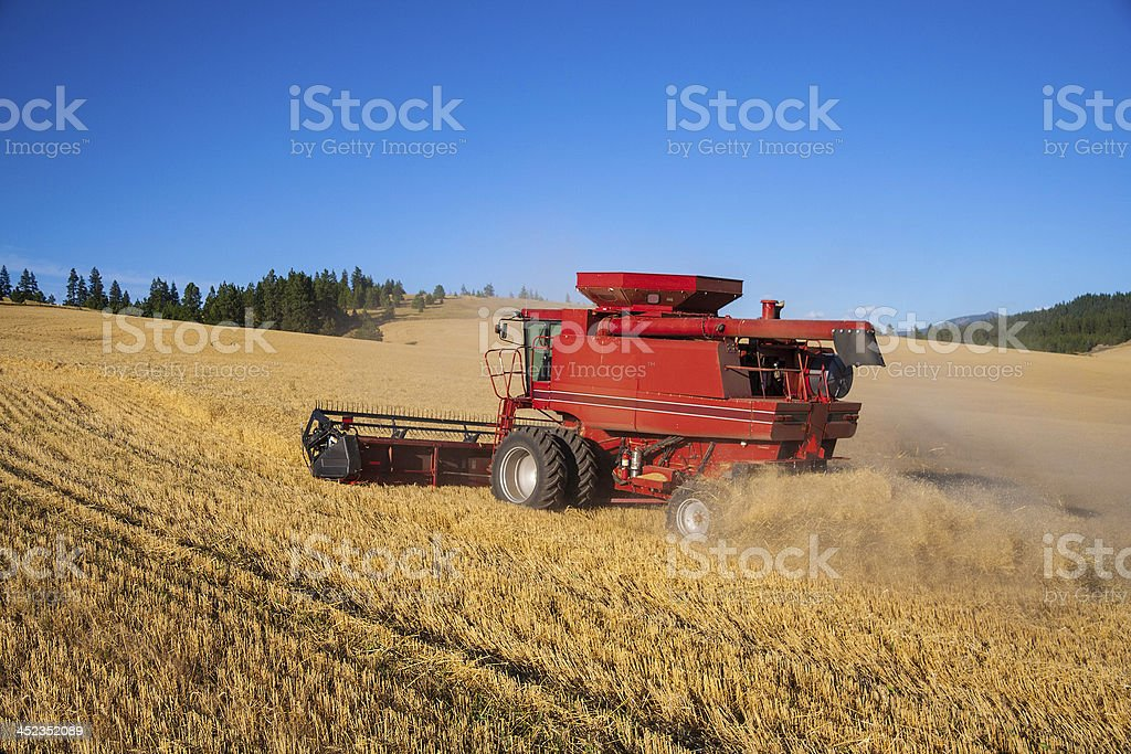 Combine Harvesting Wheat Crop royalty-free stock photo
