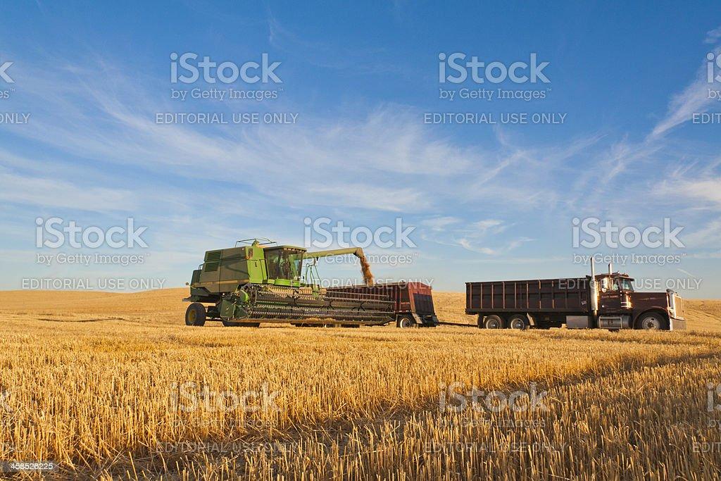 Combine Harvesting Wheat Crop royalty-free stock photo