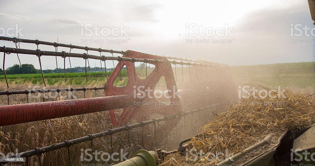Combine Head Harvesting Wheat stock photo