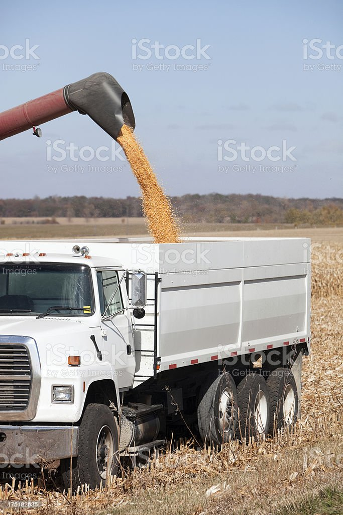 Combine Offloading Harvested Corn into Grain Truck stock photo