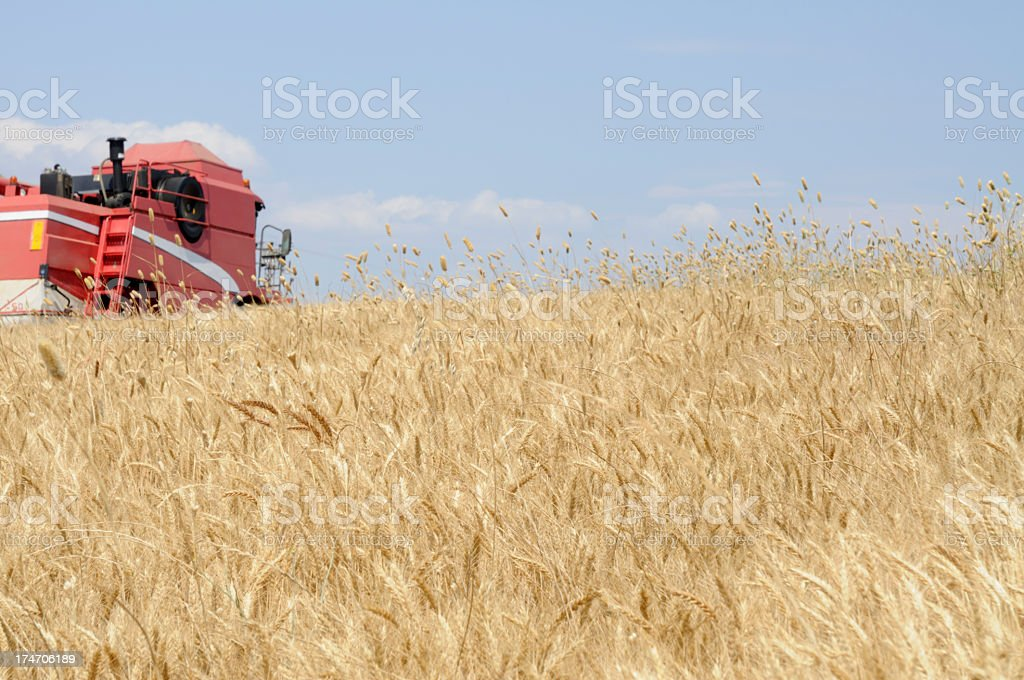 Combine on Wheat Field royalty-free stock photo