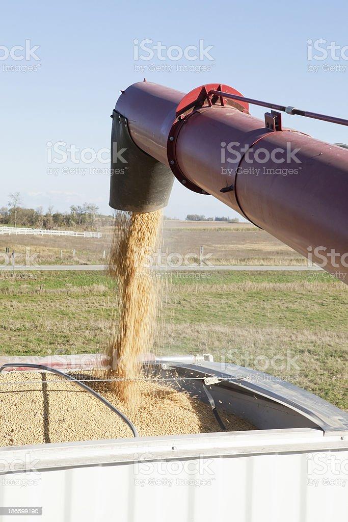 Combine Unloading Soybeans into Grain Truck stock photo