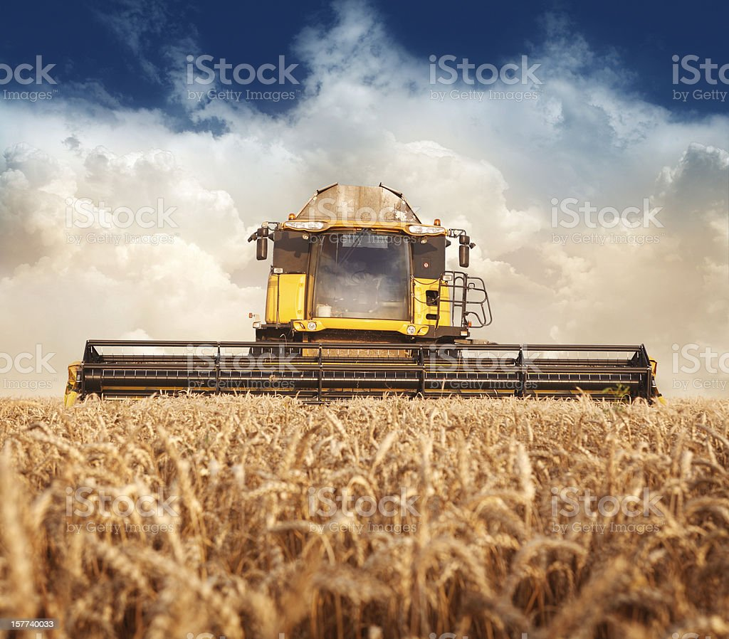 Combine working on the field stock photo