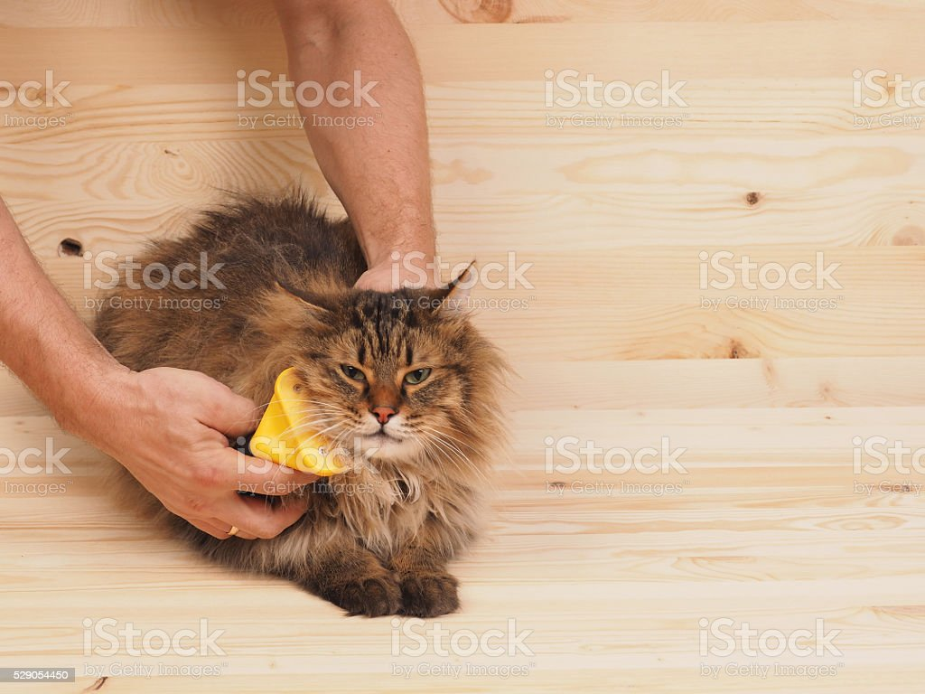 combing brush and  cat   on the wood  background stock photo