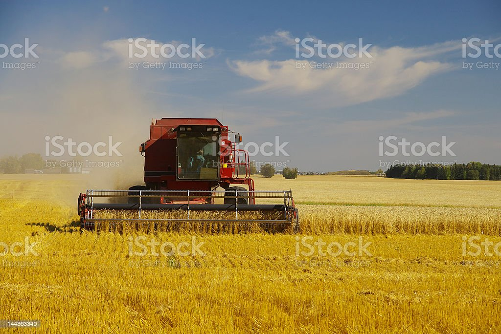 Combining a Field of Wheat royalty-free stock photo