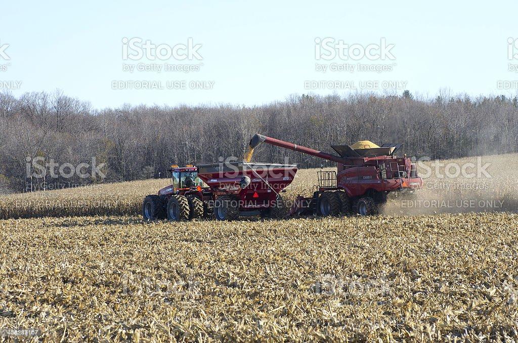 Combining Corn in Ontario stock photo