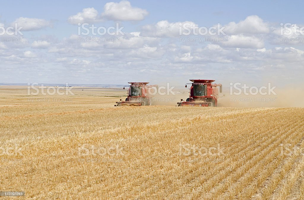 combining lentils royalty-free stock photo