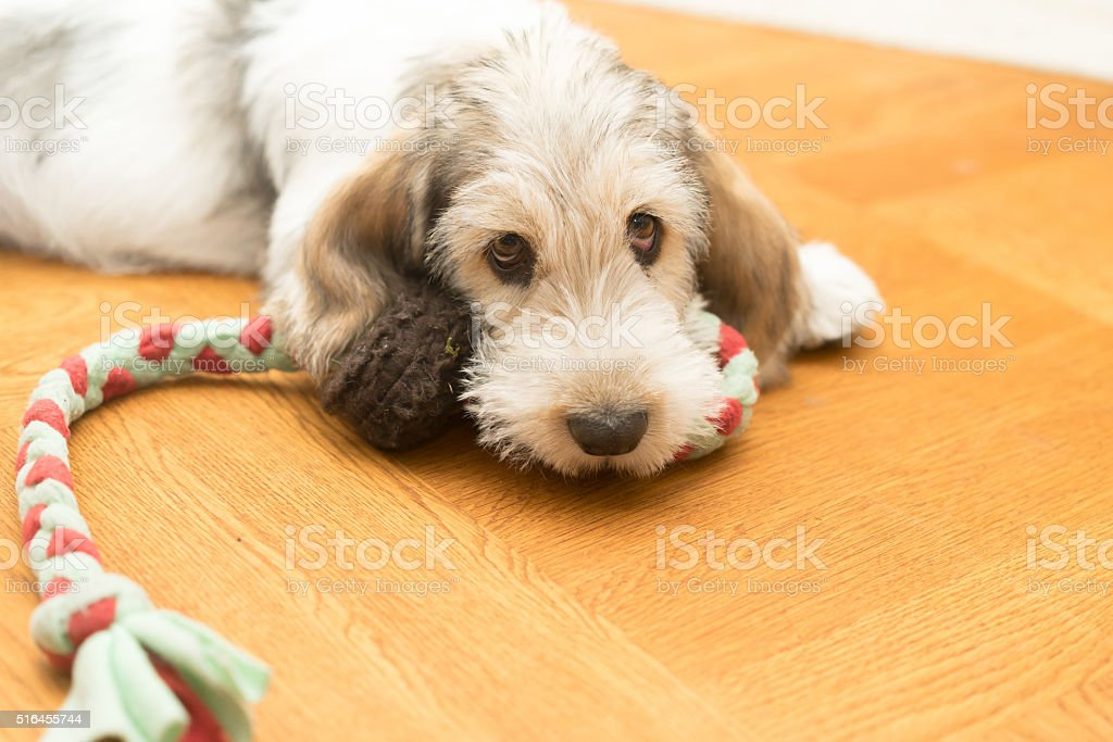 Come and play! Now! stock photo