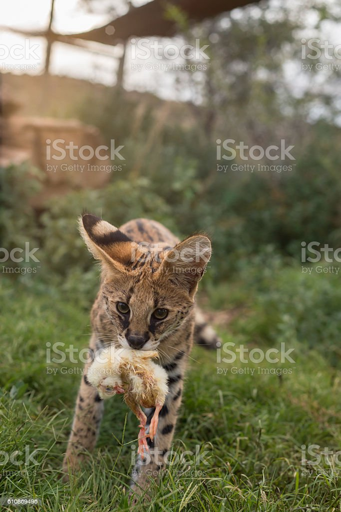 Come play stock photo