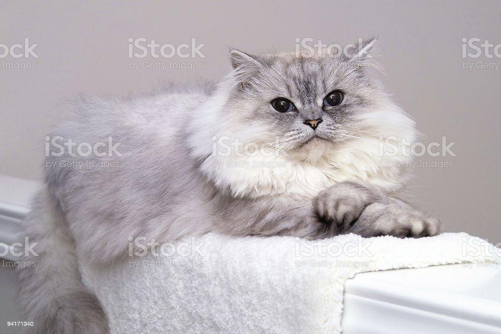 Comfortable Cat stock photo