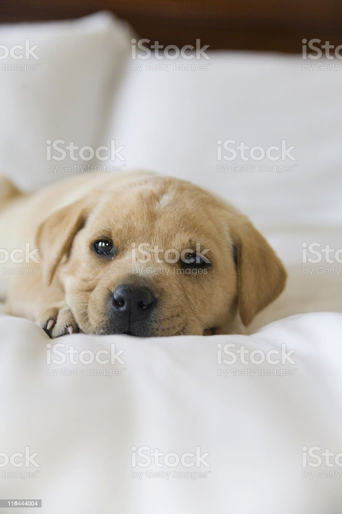 comfortable royalty-free stock photo