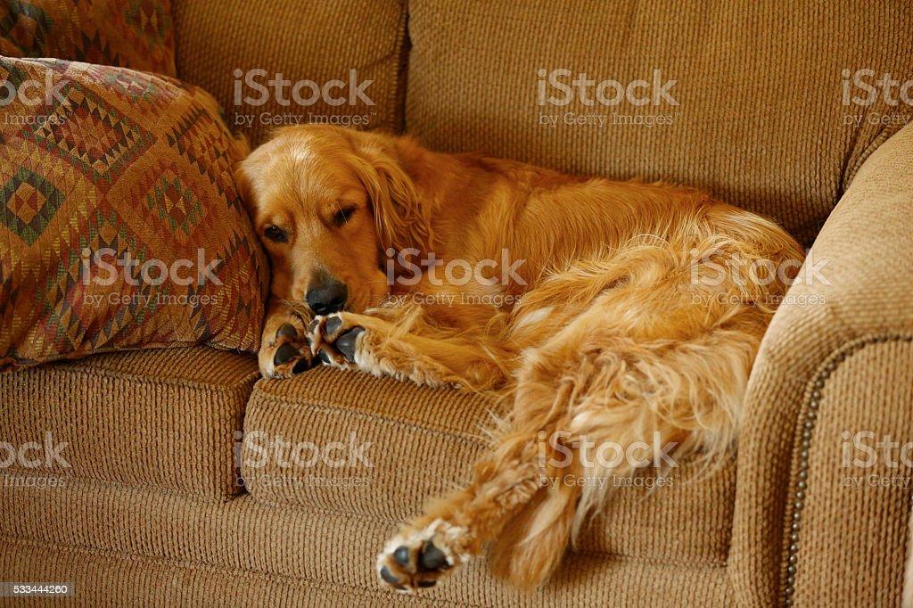Comfortable royalty-free stock photo