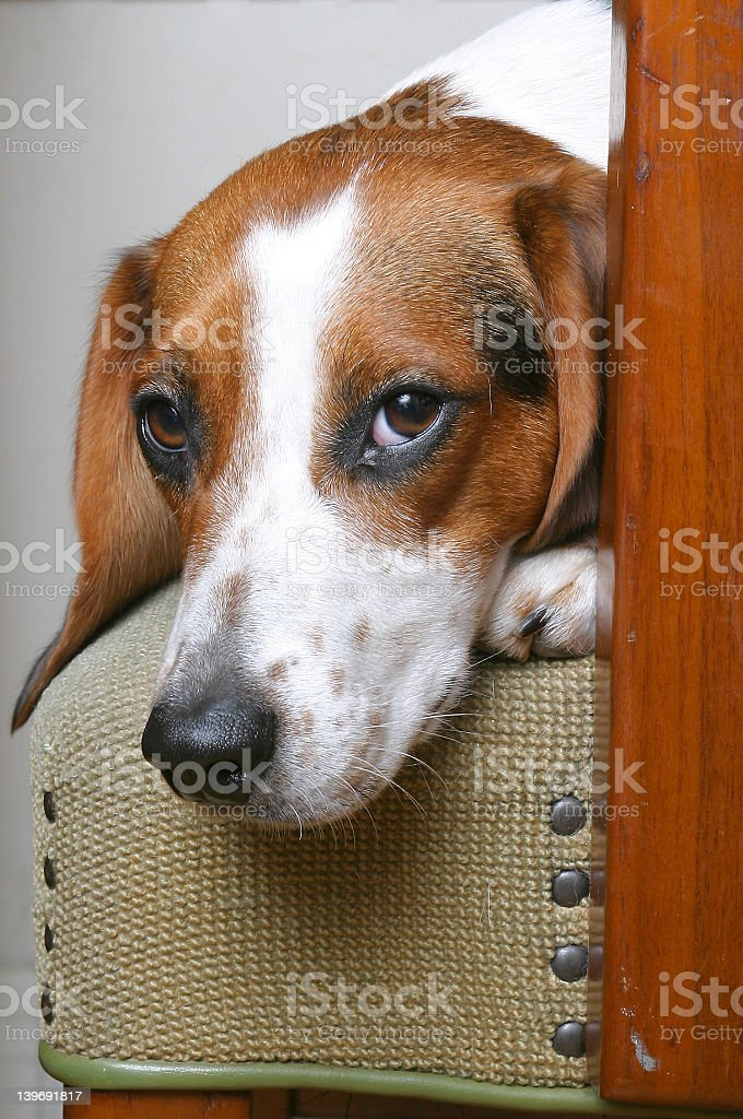 Comfortably seated royalty-free stock photo
