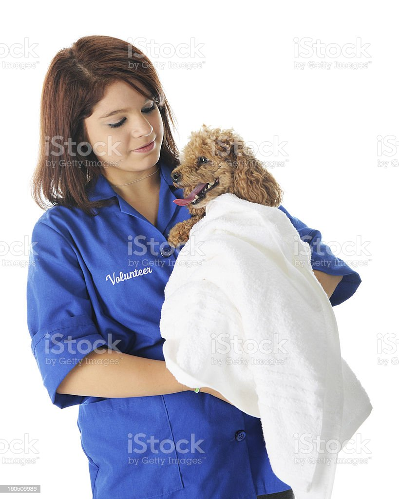 Comforting Poodle royalty-free stock photo