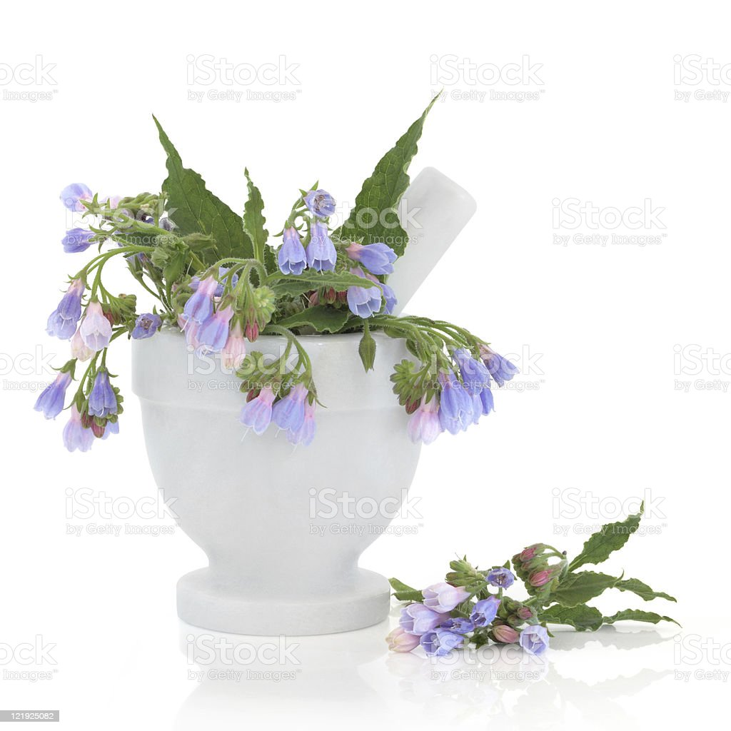 Comfrey Herb Flowers stock photo