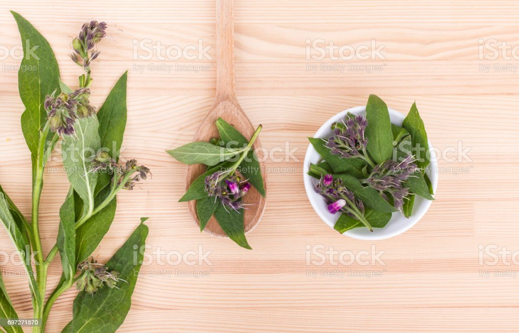 Comfrey leaves and flowers stock photo