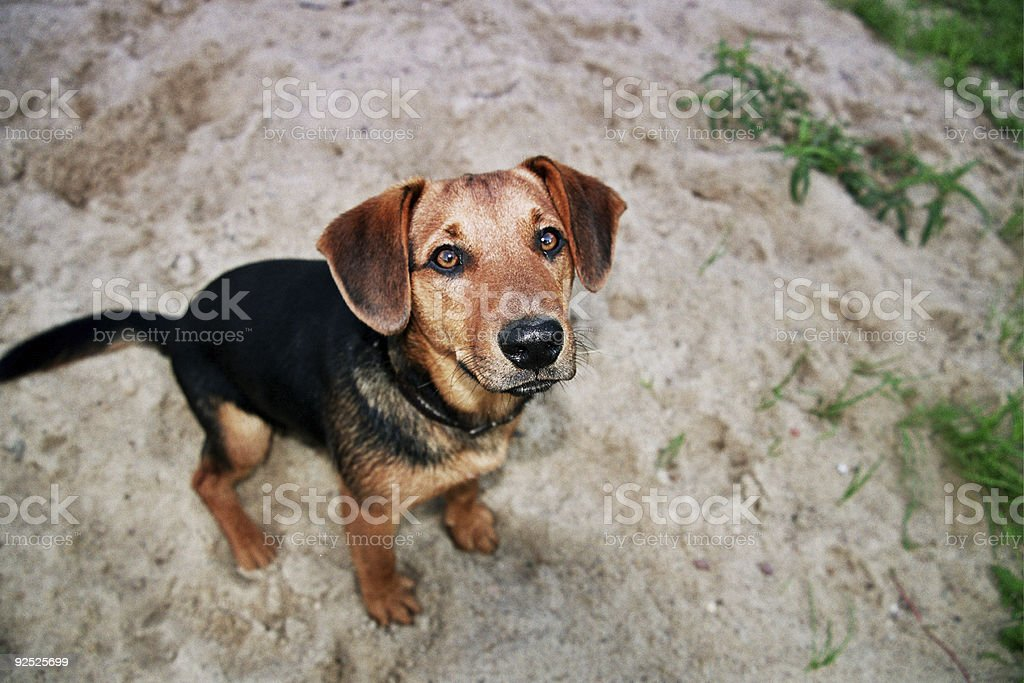 comic dog royalty-free stock photo