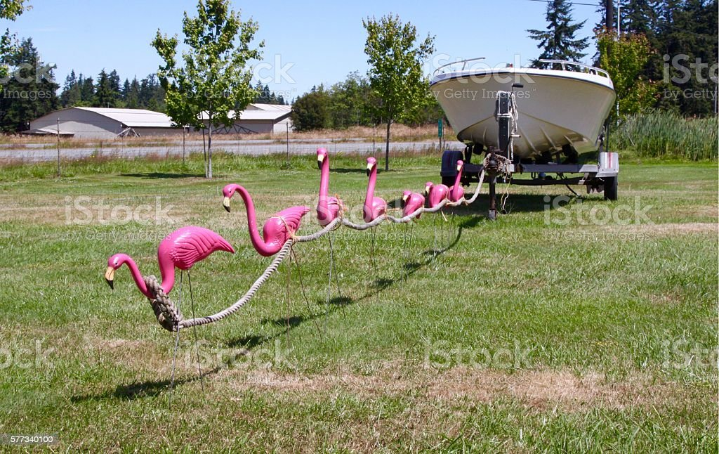 Comical Photo Of Plastic Pink Flamingos Supposedly Pulling A Boat stock photo