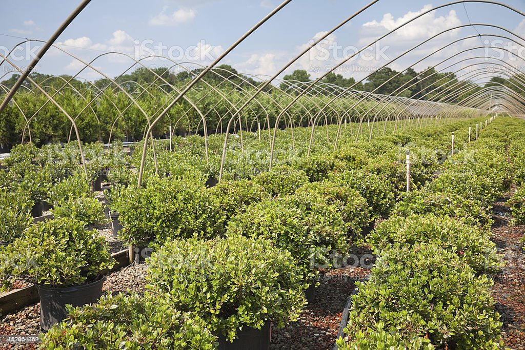 Commercial Shrub Nursery royalty-free stock photo