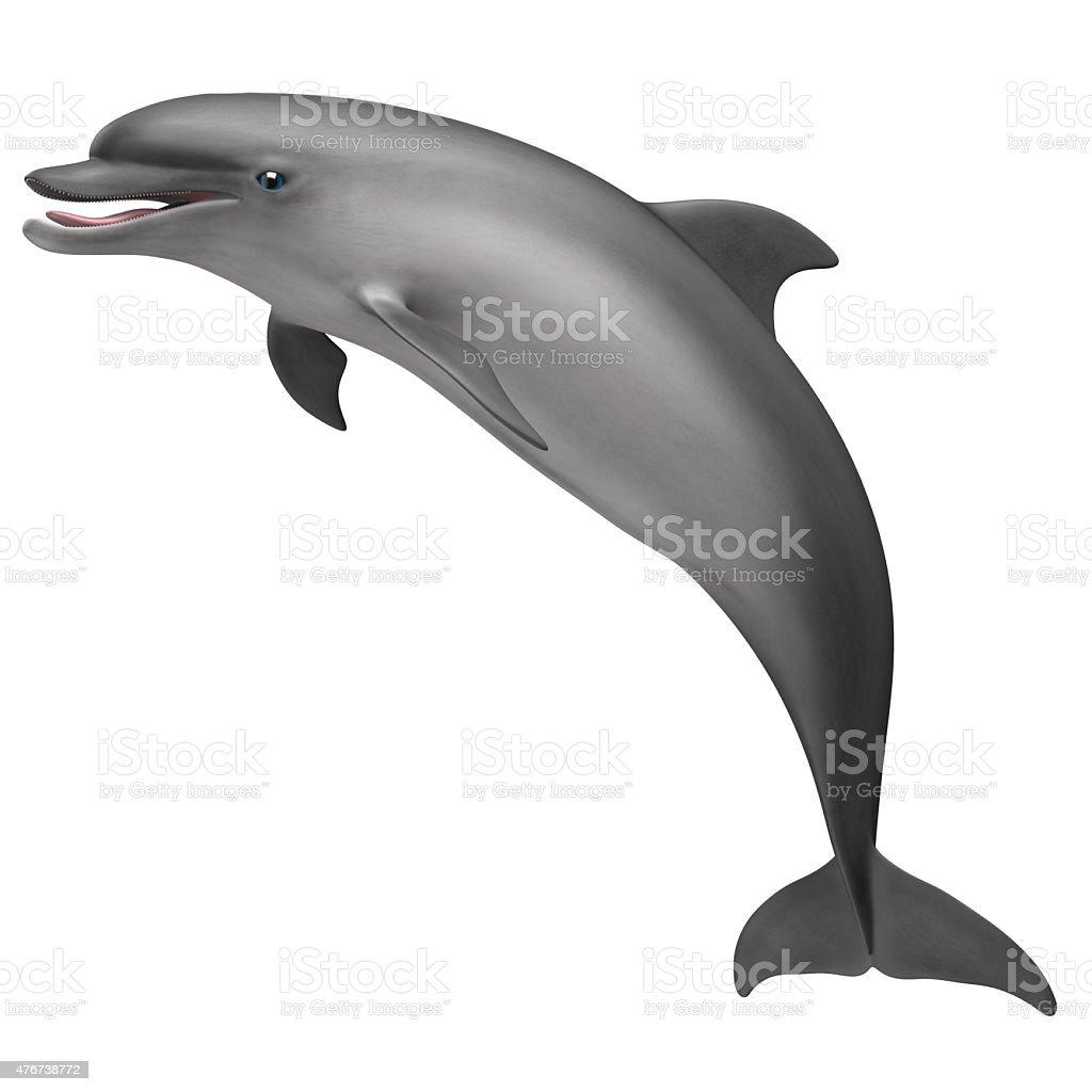 Common Bottlenose Dolphin stock photo