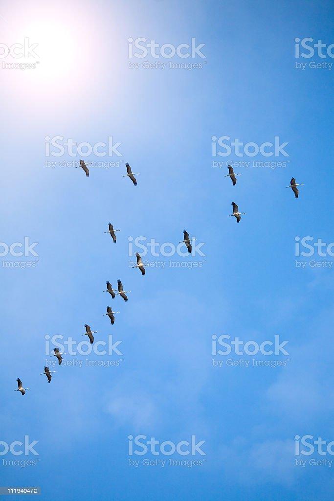 common cranes royalty-free stock photo