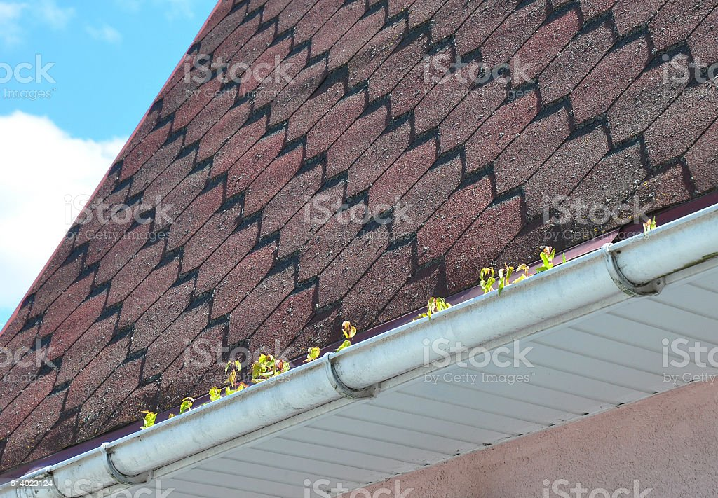 Common Gutter Problems With Moss on the Roof stock photo