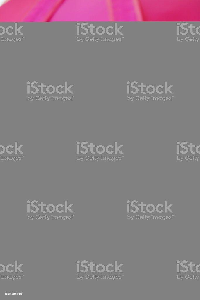 Common Pheasant stock photo