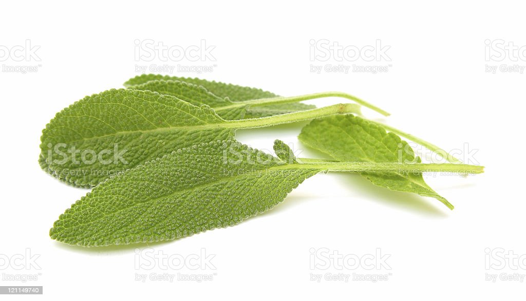 Common sage leaves isolated on white background stock photo