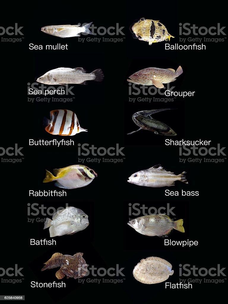 Common saltwater fish stock photo