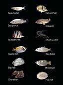 Common saltwater fish