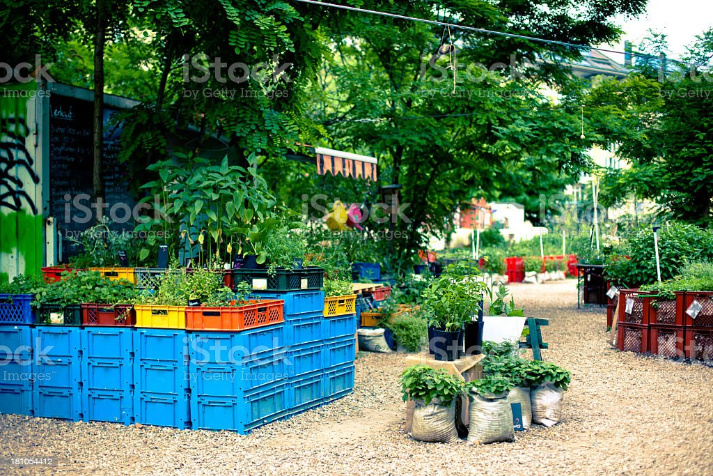 Community gardening, plants on crates and in sacks royalty-free stock photo