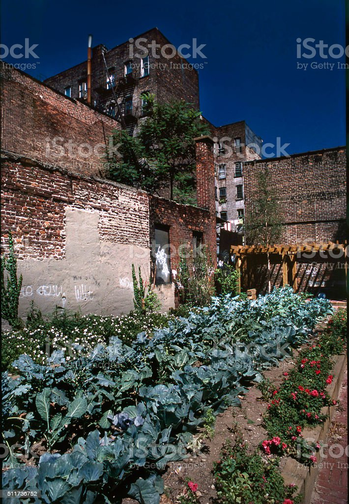 community gardens, NYC stock photo