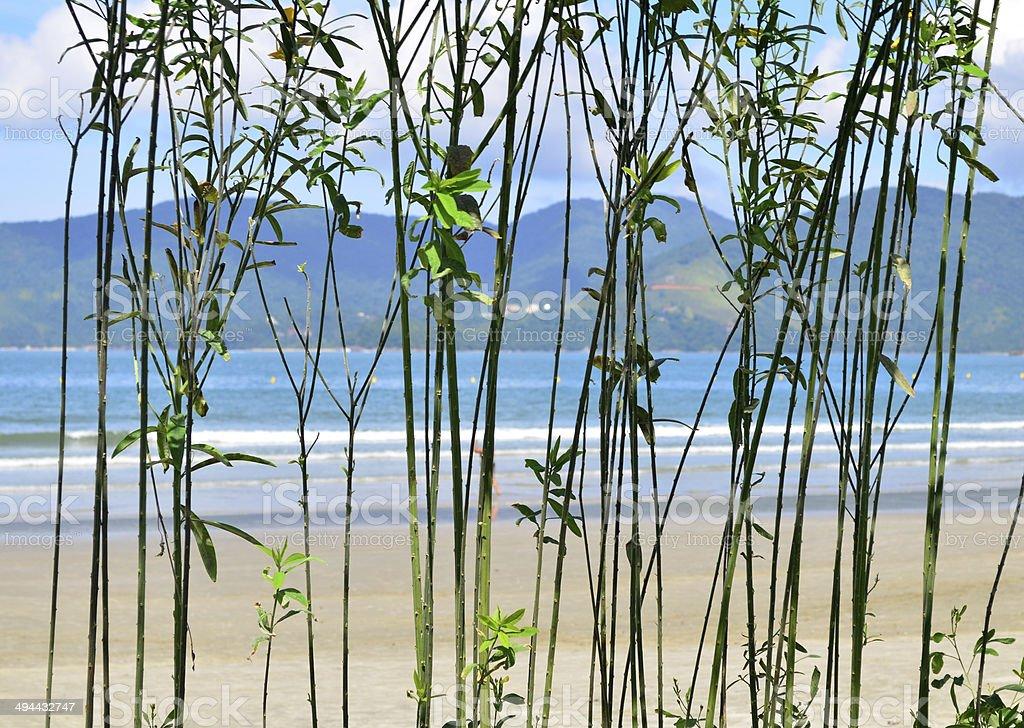 Como ? bom estar em uma praia!! stock photo