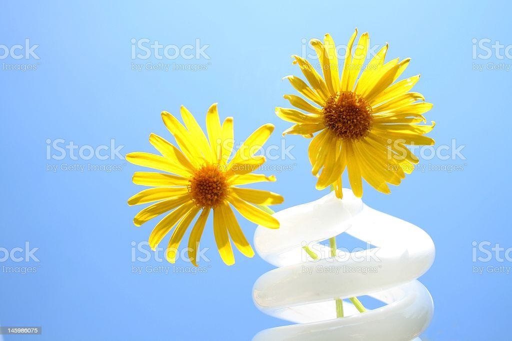 Compact fluorescent light bulb glass with yellow flowers royalty-free stock photo