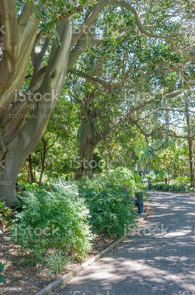 Company Garden, Cape Town stock photo